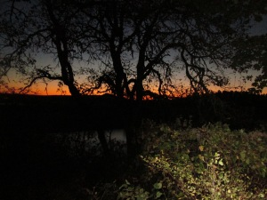 camp site - sunsets  (8)